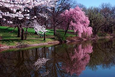 アーユルヴェーダ的 春の過ごし方