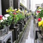 お彼岸など、お墓にたくさんの色花があがりますね。どうやって処分しているのですか?(文京区Kさん)
