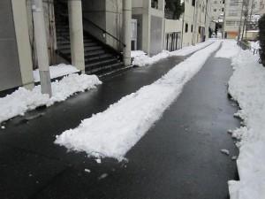 雪かきした明順寺正面